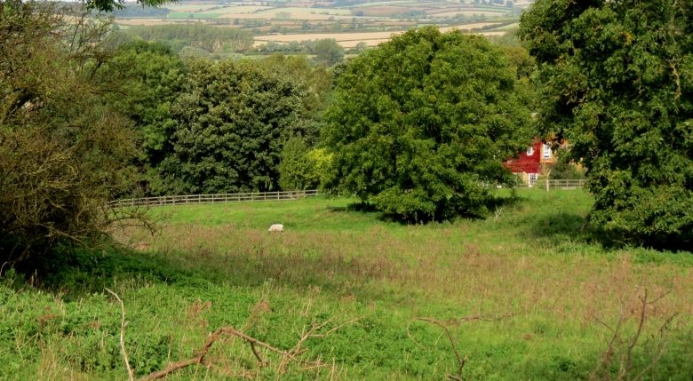 View across green meadow and distant fields, from Jurassic Way near Cottingham